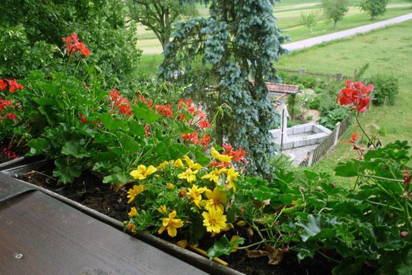 Balkon mit Blick auf den Garten